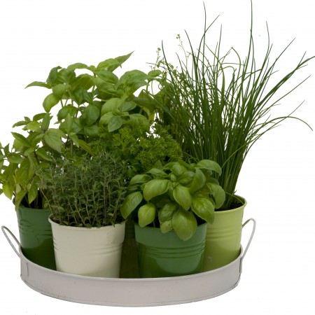 conseils astuces du mois de mars pour jardiniers tendances jardinchic le blog. Black Bedroom Furniture Sets. Home Design Ideas